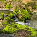 【群馬シェア旅】 チャツボミ苔公園